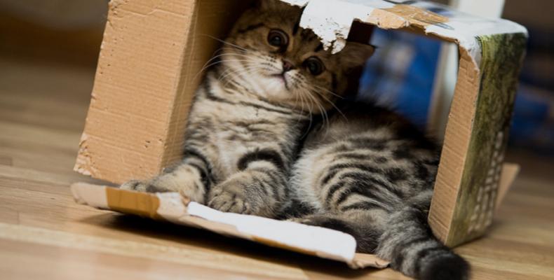 Как поступить, если на АliExpress отправитель задерживает посылку