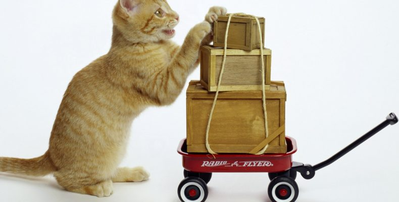 Как узнать, что заказанный товар с AliExpress пришел на почту