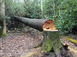 Штраф за сруб дерева в лесу