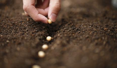 Покупка больных семян на eBay и Amazon - Будьте осторожны!
